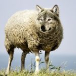 """The """"Sheepdog"""" Analogy is Deeply Flawed"""